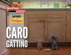 caro gattino friskies