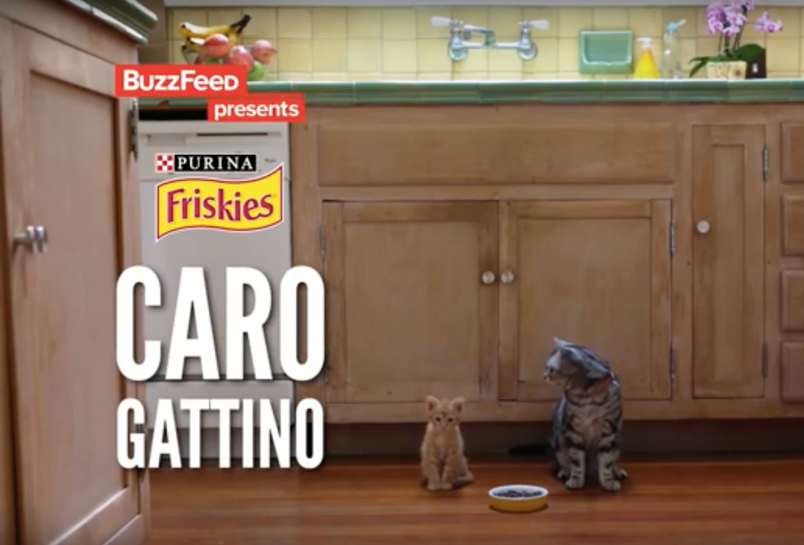caro gattino friskies