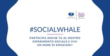 social whale