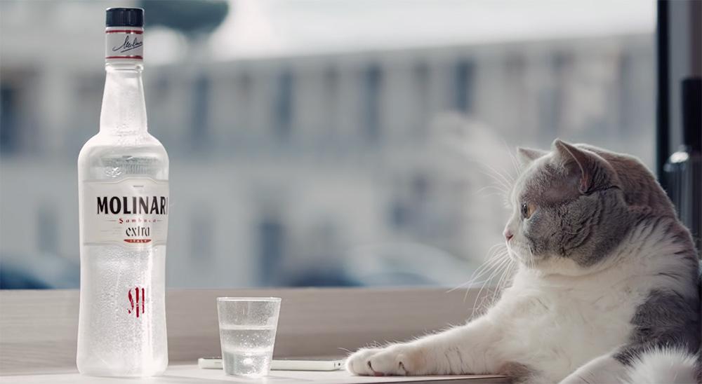 molinari gatto marketing