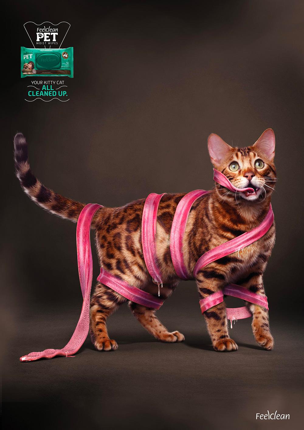 feelclean cat