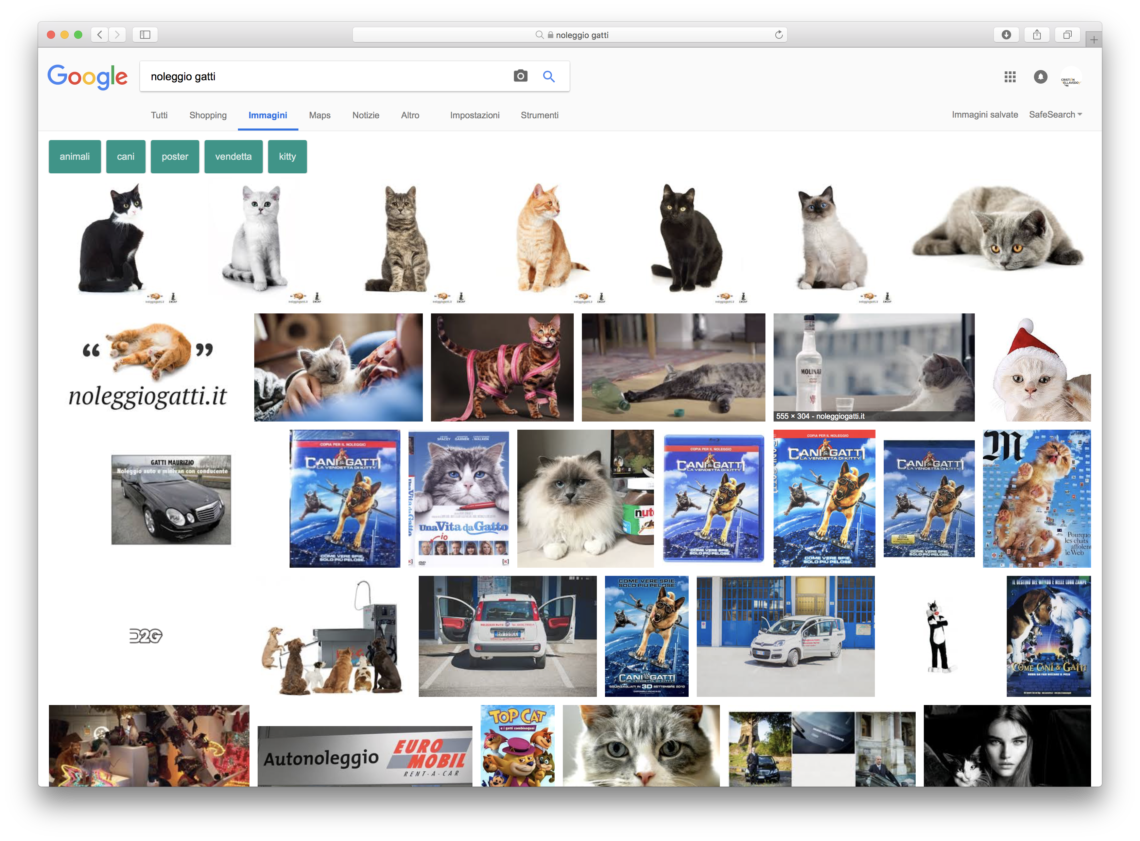 noleggio gatti social network